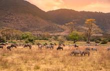 Landscape Of Ngorongoro Crater...