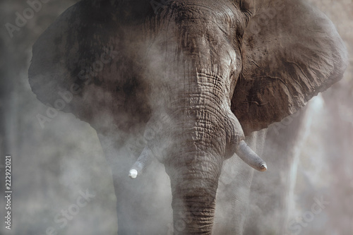 Amazing african elephant with dust. Huge elephant male in front of the camera. Wildlife scene with dangerous animal. Great tusker in the nature habitat. Loxodonta africana.
