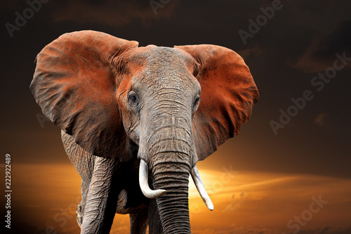 Elephant on sunset