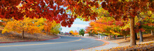 Road Through Colorful Trees In Autumn