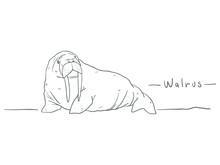 Walrus Drawing Cartoon Doodle