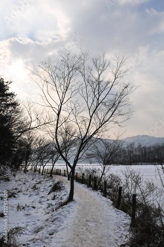 Fotografía  겨울나무