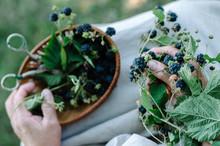 Hand Picking Blackberries In Rustic Style
