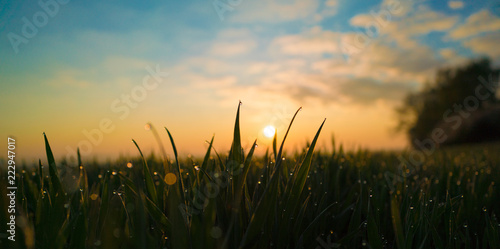 Foto  Sunrise in green rural field