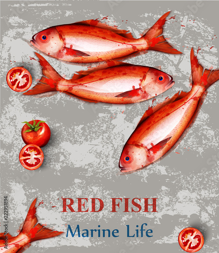 Red Fish Watercolor Vector Fresh Small Fishes On Vintage