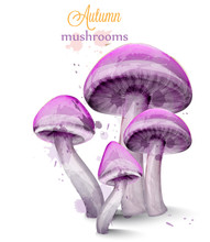 Purple Mushrooms Watercolor Vector Isolated On White Backgrounds