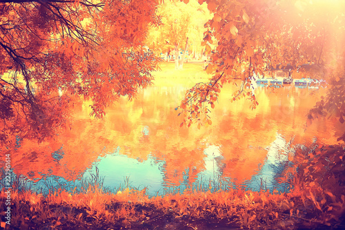 Valokuvatapetti autumn forest landscape / yellow forest, trees and leaves October landscape in t