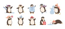 Bundle Of Adorable Penguins We...