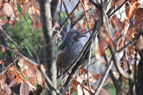 Staande foto Vogel 秋の野鳥