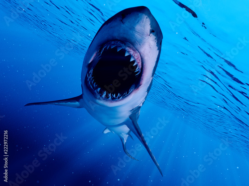 3d rendered illustration of a great white shark Fototapete