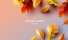 Falling Autumn Leaves Background Elements