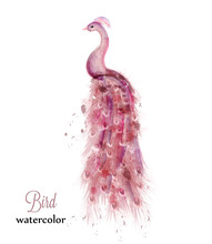 Pink Peacock Watercolor Vector...