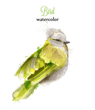 Yellow Bird Watercolor Vector. Colorful Painted Style Illustrations