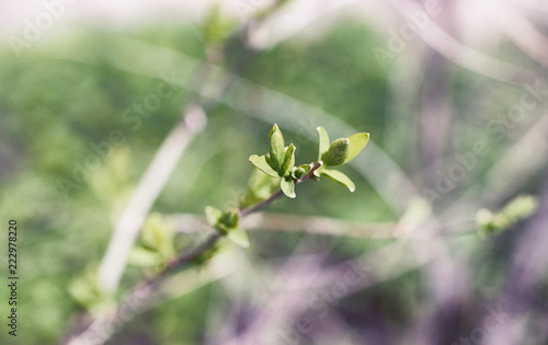 Fotobehang Olijf Landscape is summer. Green trees and grass in a countryside land