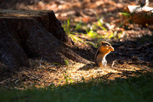 A Little Chipmunk With A Face ...