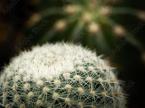 Tuinposter Cactus The Globe of The Cactus