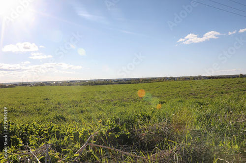 Fotobehang Blauwe hemel Landscape is summer. Green trees and grass in a countryside land