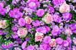 Leinwandbild Motiv Blumen, Hintergrund, Wand, pink, rosa