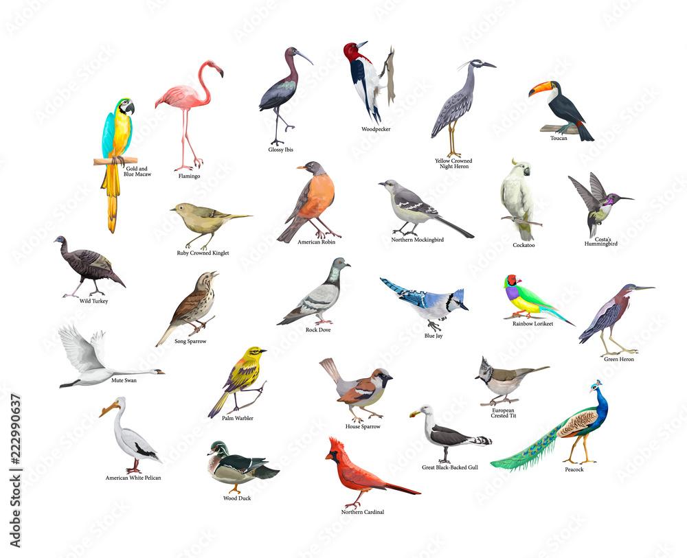 Zbiór realistycznych tropikalnych ptaków. Egzotyczna przyroda