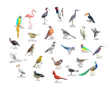Collection Of Realistic Tropical Birds. Exotic Wildlife