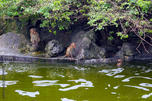 Foto op Canvas Aap Vietnam. Nha Trang City, monkey