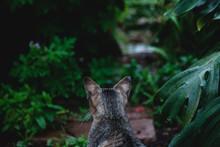 Cat Sitting In A Garden