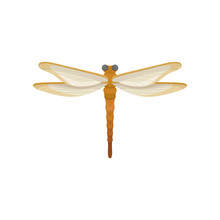 Dragonfly With Bright Orange Body And Fragile Wings. Wonderful Flying Insect. Flat Vector Element For Room Decor Or Print