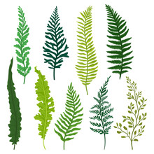 Flat Vector Set Of Different Types Of Fern. Twigs With Bright Green Leaves. Natural Elements. Wild Forest Plant