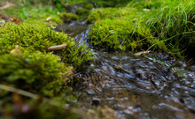 Forest Stream In Taiga Forest. Pure Water. Ecology Environment