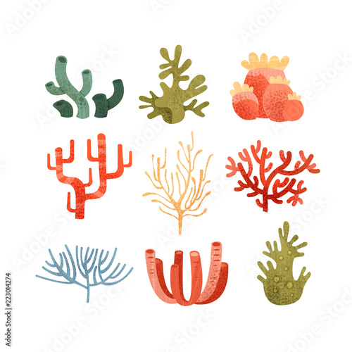 Photo  Seaweed set, colorful underwater marine plants vector Illustrations on a white b