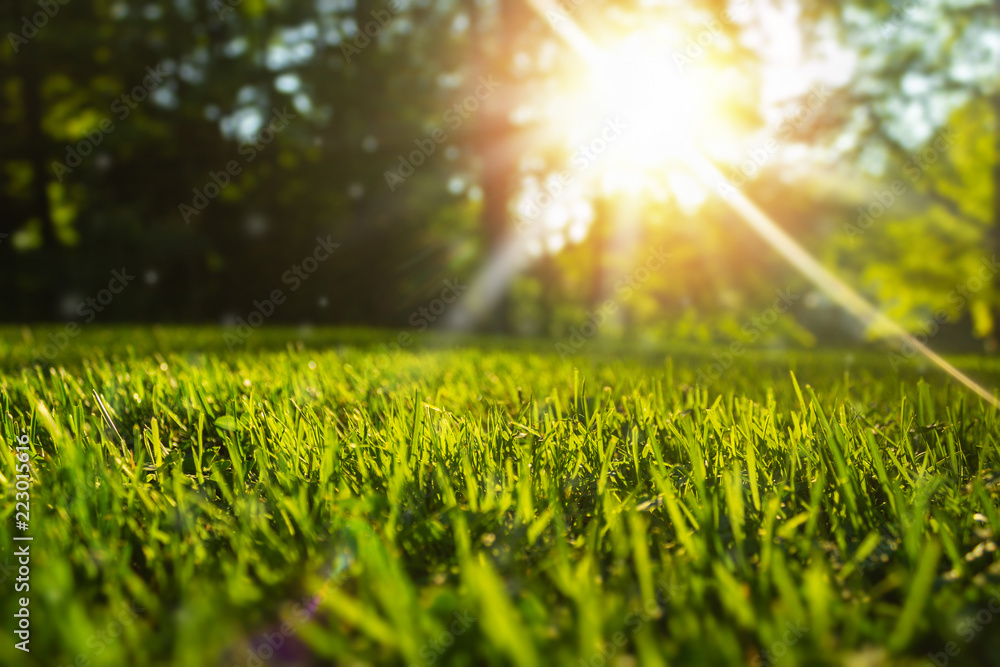 Fototapety, obrazy: Tranquil fresh grass for growth and water concept mother nature.  Copy space for text.