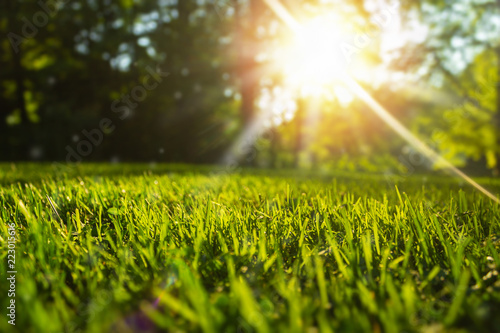Photo  Tranquil fresh grass for growth and water concept mother nature