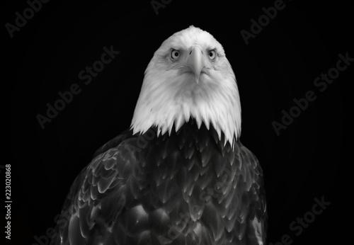 Foto op Aluminium Eagle Black and white portrait of an eagle