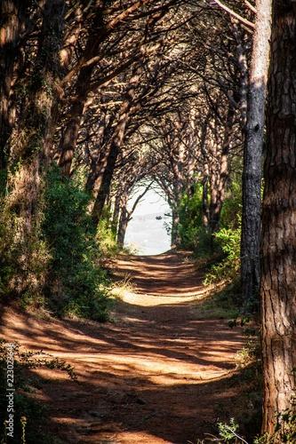 Deurstickers Toscane Wald in Bibbona, Toskana