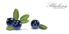 Blue Tasty Blueberry Set With Leaf On Isolated White Background. Blueberries For Juice, Pudding, Smoothie, Sauce, Ads. 3d Realistic Icon Package Design. Vector
