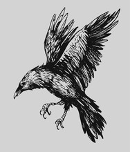 Black Raven. Hand Drawn Sketch Converted To Vector. Isolated