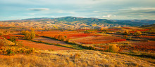 Landscape With Vineyards In La...