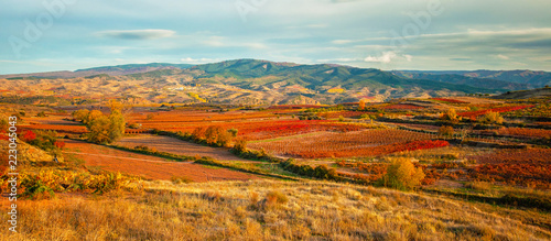 Photo Stands Autumn Landscape with vineyards in La Rioja