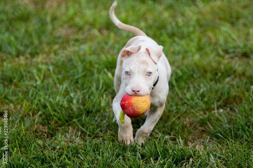 Fotografie, Obraz  An apple a day keep the vet away