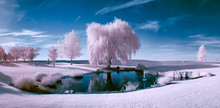 Infrared Scene Of A Pond And Trees