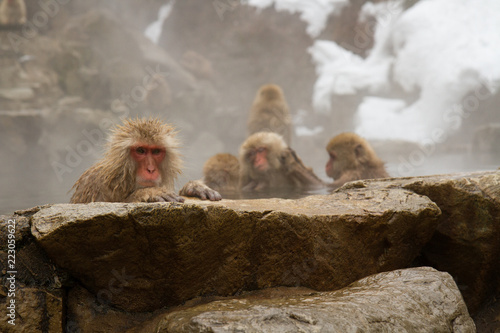 Foto op Canvas Aap Snow Monkey in Hotspring