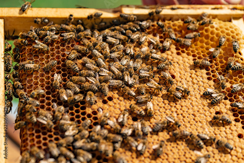Photo bees sit on the frame of honeycombs during the day in the garden