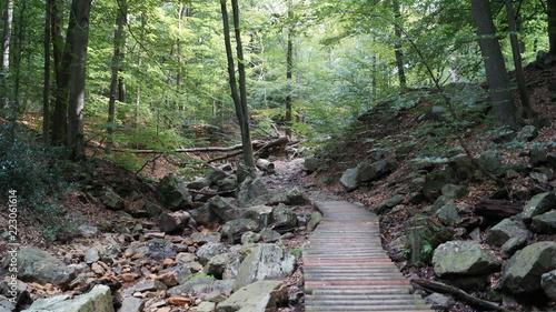 Fotobehang Olijf Ballade e en Forêt spadoise