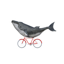 Fanciful Whale Riding A Bike.