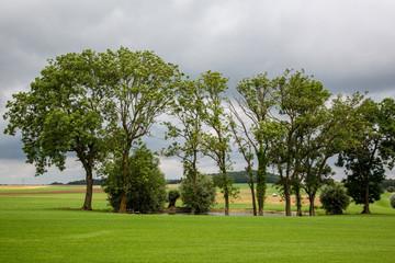 Fototapeta tree in the park