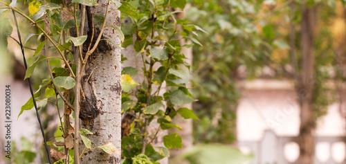 Fotobehang Bomen tree closeup