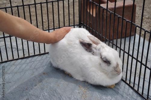 Fotografía  ウサギに触る子供の手