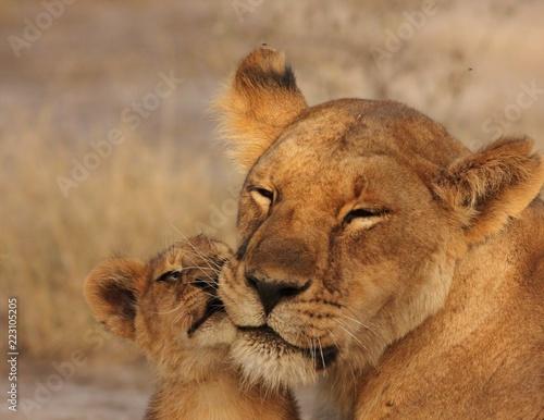 Staande foto Leeuw Lion Cubs Serengeti