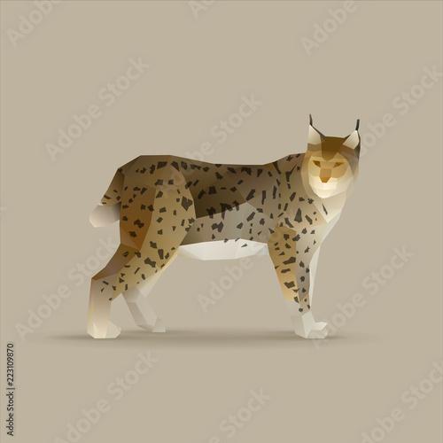 Fényképezés lynx lynx, norden wildcat vector illustration