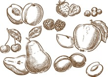 Fruits / Sketch Hand Drawn Fruits Illustration, Engraving, Ink, Line Art. Creative Conceptual Vector.